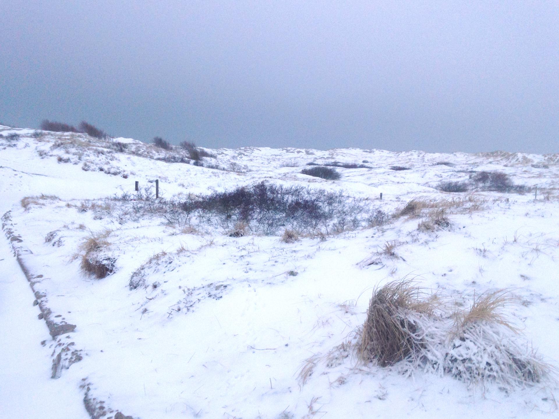 IMG_0219_winter